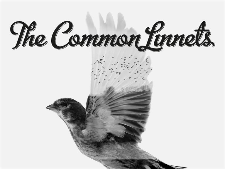 Name, logo and artwork design The Common Linnets